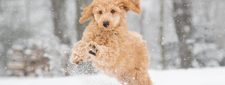 consejos fotos nieve swisspro
